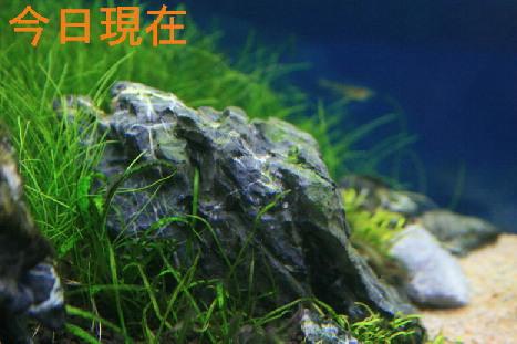 d0090170_1525148.jpg