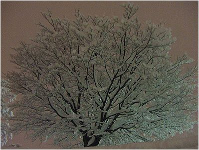 雪化粧_b0067302_2149391.jpg
