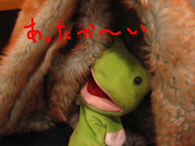 カエルくんの公約は・・・_c0064514_20422445.jpg