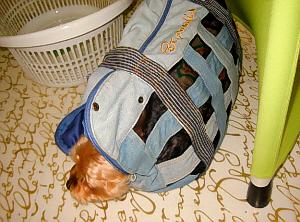 衝立と荷物を入れる籠の間に、バックに入ったまま寝ているわんこ。ダイエットなんて全く興味はないようですね。