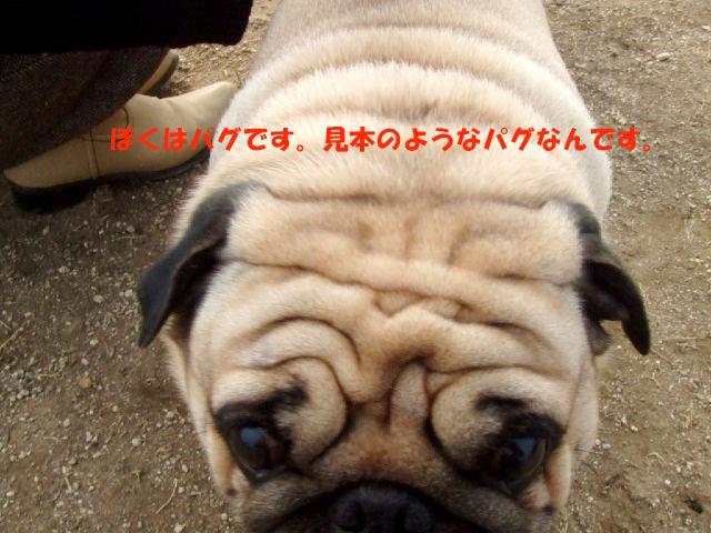 f0059334_9184648.jpg