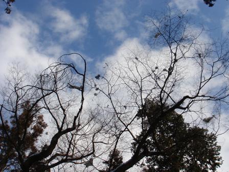 一月の風景 その4 ~願いゴト~_a0014840_2224431.jpg