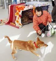 「がけっぷち犬」飼い主決まる、名前は「リンリン」_b0052564_11412861.jpg