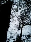 木と水と土の間で_d0027486_1474671.jpg