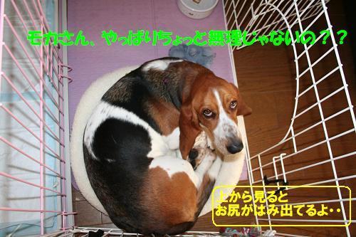 f0121712_10142245.jpg