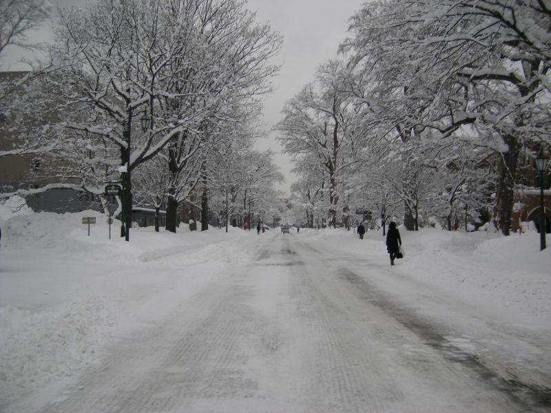 一夜明けて、雪の花_c0025115_16552941.jpg