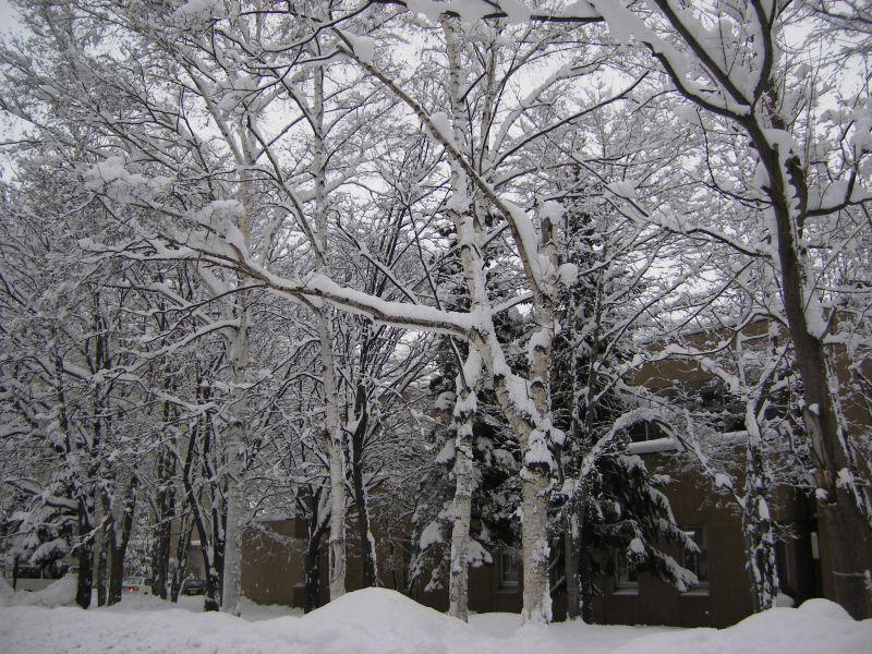 一夜明けて、雪の花_c0025115_16575186.jpg