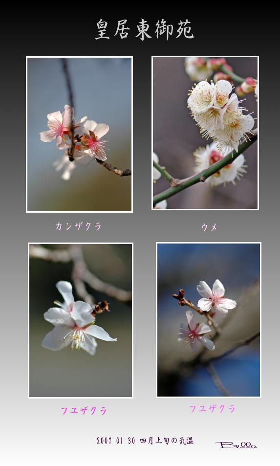 皇居東御苑にも春の気配_f0012718_2331163.jpg