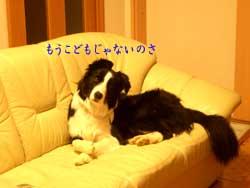 b0090938_011999.jpg