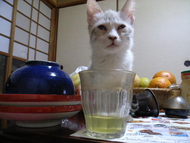 お茶_d0073743_21322669.jpg