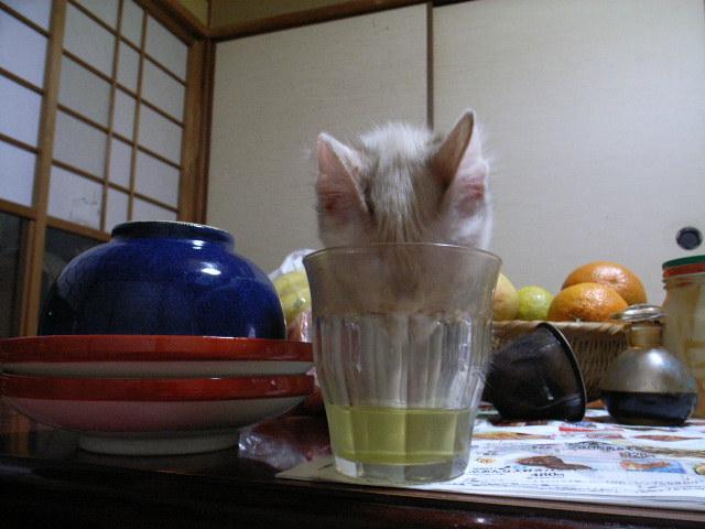 お茶_d0073743_21324725.jpg