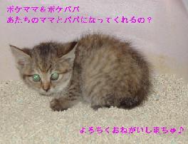 c0032073_15394766.jpg