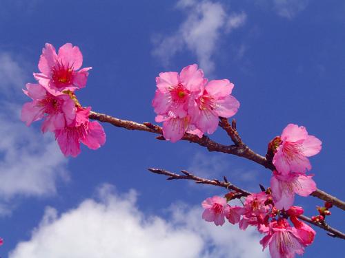 花の色は 移りにけりな いたずらに_c0057821_22544312.jpg
