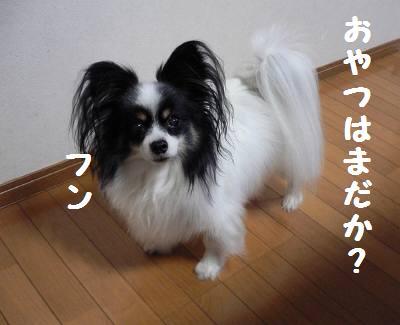 d0059230_018085.jpg