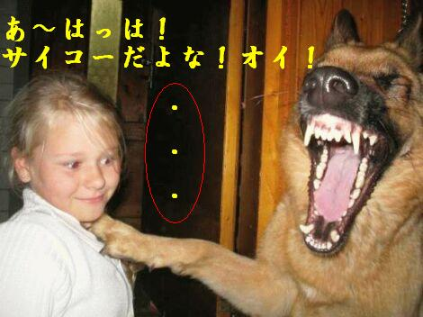 おもしろ動画で笑ってカモン!ですやん!_f0056935_15101427.jpg