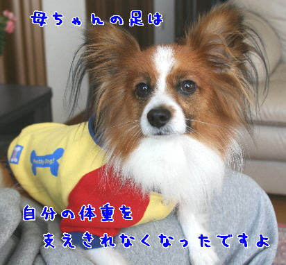 d0013149_119767.jpg