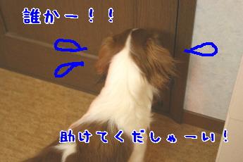 d0013149_1232212.jpg