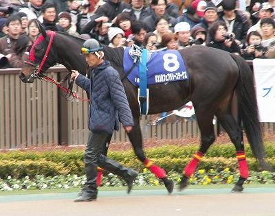 川崎記念(GI)は、ヴァーミリアン(牡5)が6馬身差の圧勝で初GI制覇_b0015386_23214485.jpg