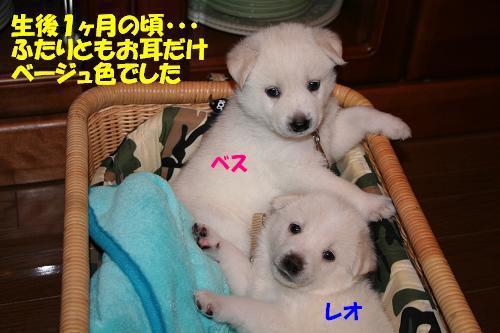 f0121712_1702843.jpg