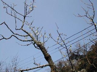 鎌倉散策_c0073015_22293696.jpg