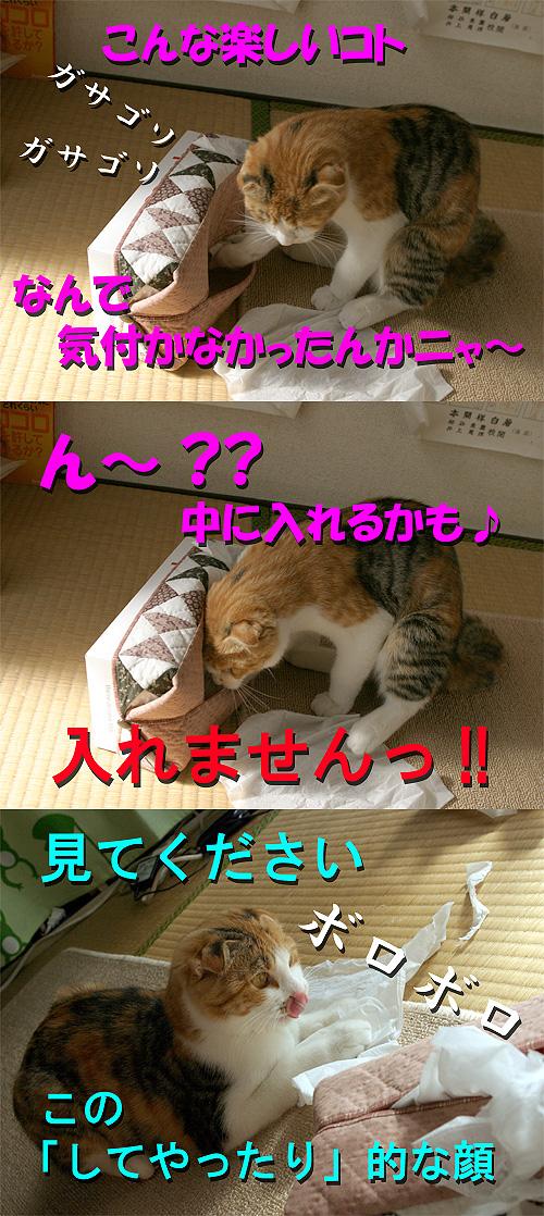 a0088031_19455563.jpg