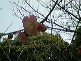 パンダの春_b0096957_2225745.jpg