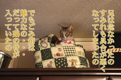f0101903_16193865.jpg