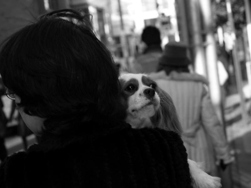 人+犬=伏_e0004009_011775.jpg