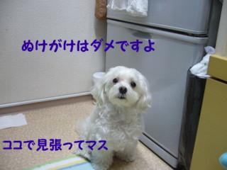 f0005727_1643561.jpg