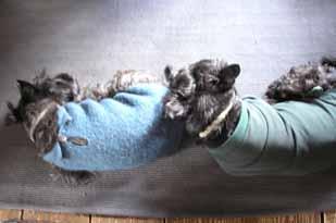 犬も枕をするんです_e0055098_1525317.jpg