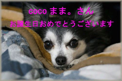c0080002_21353213.jpg
