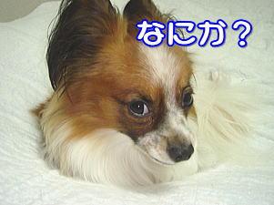 f0011845_20584013.jpg