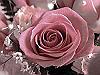 f0126951_22394224.jpg