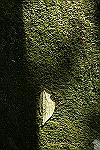 f0126951_22492494.jpg