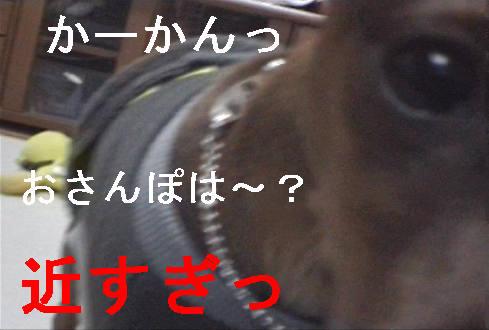 f0123589_1523013.jpg