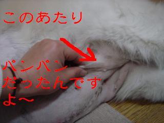 f0086814_6174784.jpg