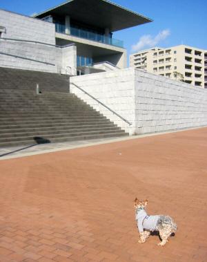 美術館へ上がる階段を見つめている小型犬。グレーのパーカーを着込んでいます。耳をピンと立てて、何か思案している様子。