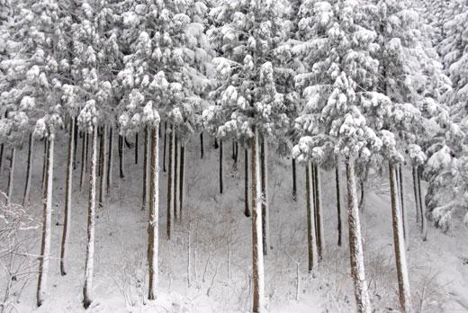 雪景色Ⅲ_c0093046_10501649.jpg