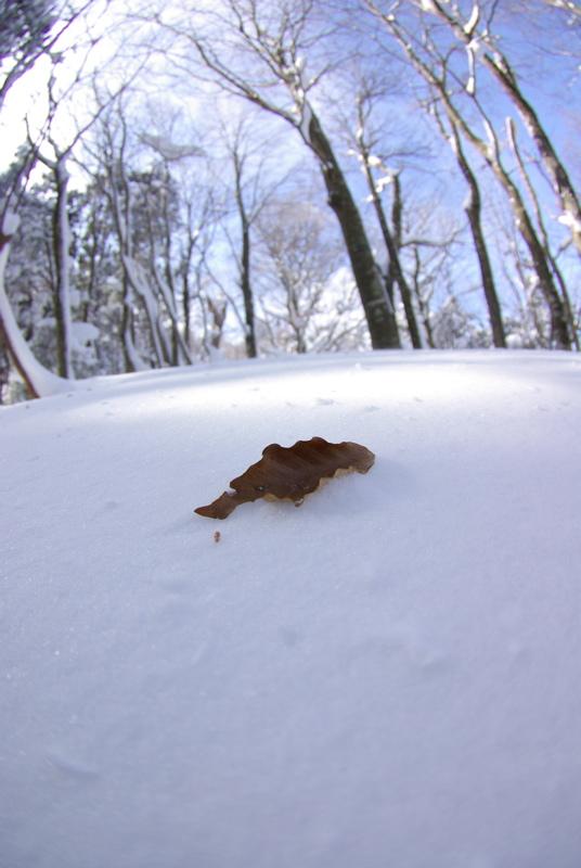 2月3日 比婆山(広島県民の森)スノーシューハイクその2_a0009554_19593626.jpg