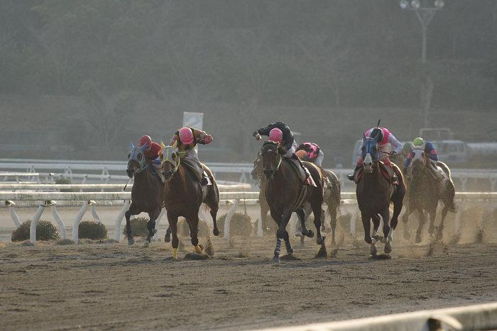 2007年2月4日(日) 高知競馬 10R アメジスト特別_a0077663_1972695.jpg