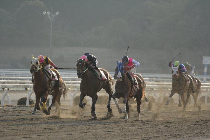 2007年2月4日(日) 高知競馬 10R アメジスト特別_a0077663_1973723.jpg