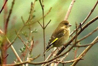鳥のいる風景_f0045624_2317583.jpg