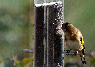 鳥のいる風景_f0045624_23181550.jpg