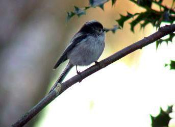 鳥のいる風景_f0045624_23422279.jpg