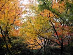 フォーシーズンズ椿山荘東京/\'06 December(2)_b0035734_12113914.jpg