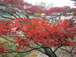 フォーシーズンズ椿山荘東京/\'06 December(2)_b0035734_12133352.jpg