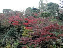 フォーシーズンズ椿山荘東京/\'06 December(2)_b0035734_1213354.jpg