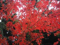 フォーシーズンズ椿山荘東京/\'06 December(2)_b0035734_12151443.jpg