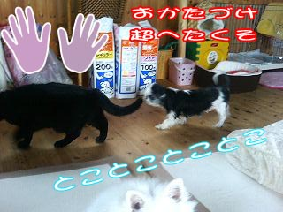 c0105157_11342854.jpg