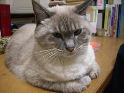 考察する猫_c0006826_7485.jpg